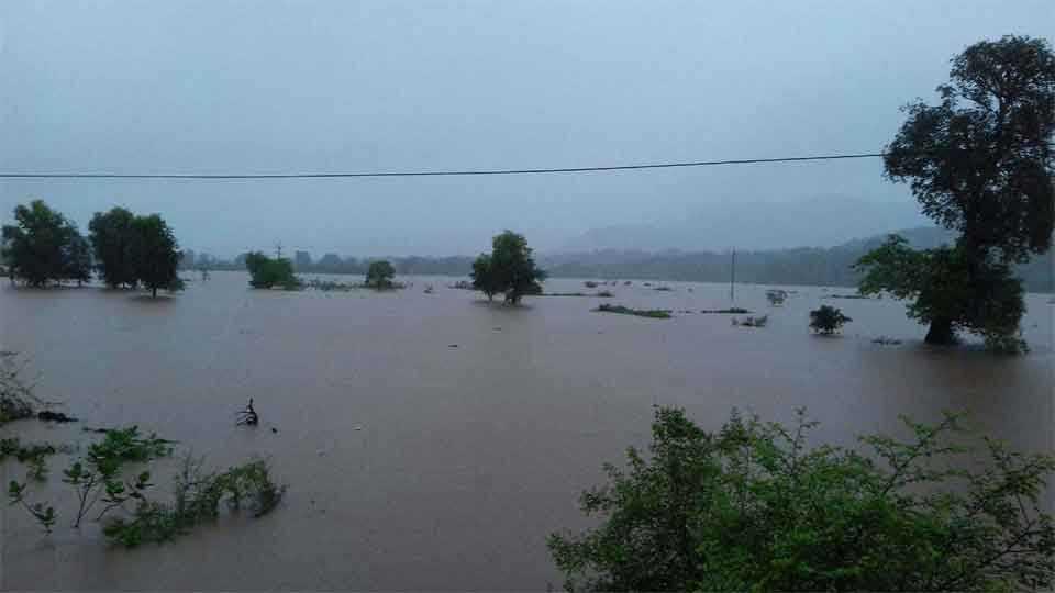 नारंगी नदीच्या पुराचे पाणी भातशेतीत घुसले आहे.