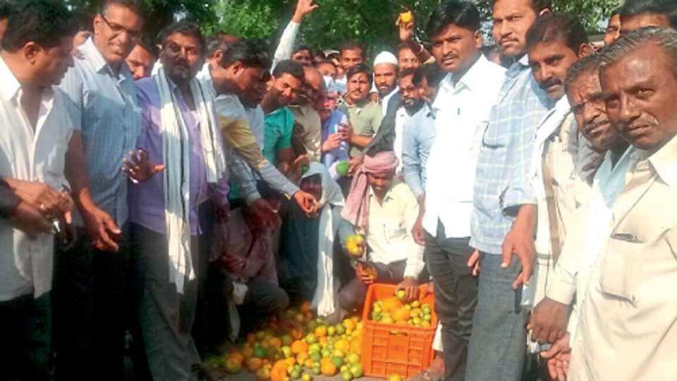 विरखेड, जि. अमरावती - चलनबंदीमुळे संत्र्याला खरेदीदार मिळत नसल्याने शेतकऱ्यांनी सोमवारी (ता.१४) रस्त्यावर संत्री फेकत शासनाचा निषेध केला.