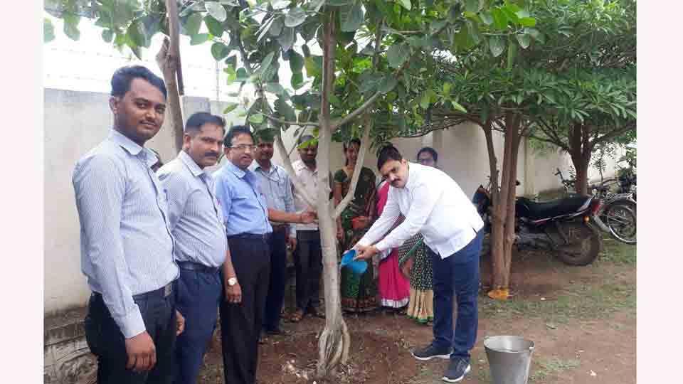Birthday of trees celebrated in Sripur Sakal medias activity at Akluj Aurangabad
