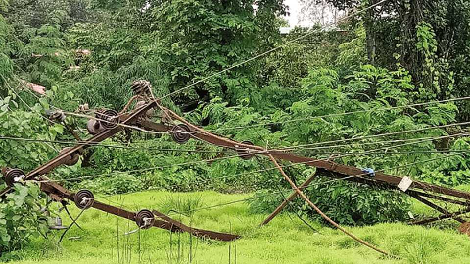 कलमठ - तालुक्यात ठिकठिकाणी वीज वाहिन्यांवर असे वृक्ष कोसळले आहेत.