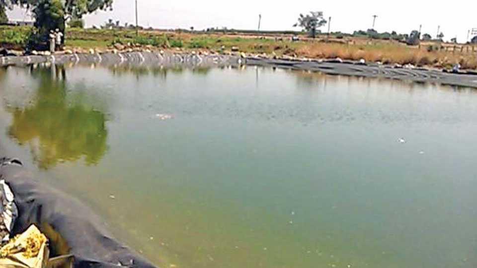 करोली (एम) - हिंमतबाज शेतकऱ्यांनी शेततळ्यांत पाणी साठवून दुष्काळाला वेसण घातली आहे.