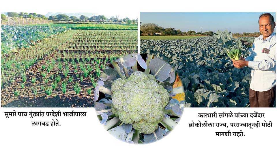 Foreign-Vegetable Plantation