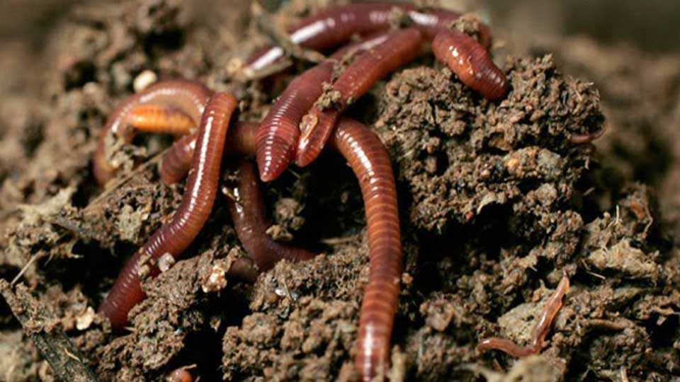 Building of First Vermicomposting project in konkan