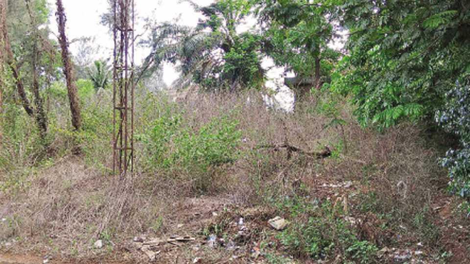 सिंधुदुर्गनगरी - येथे सुशोभिकरण न झाल्याने वाढलेले गवत आणि जंगली झुडपे.