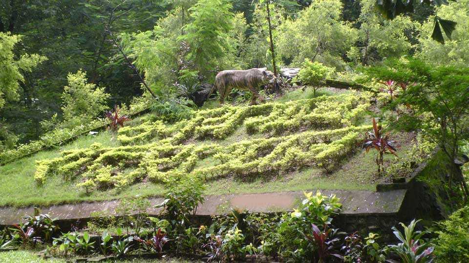 Sanjay-Gandhi-National-Garden