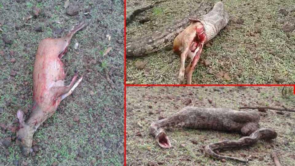 sindhudurg news marathi news python news konkan news