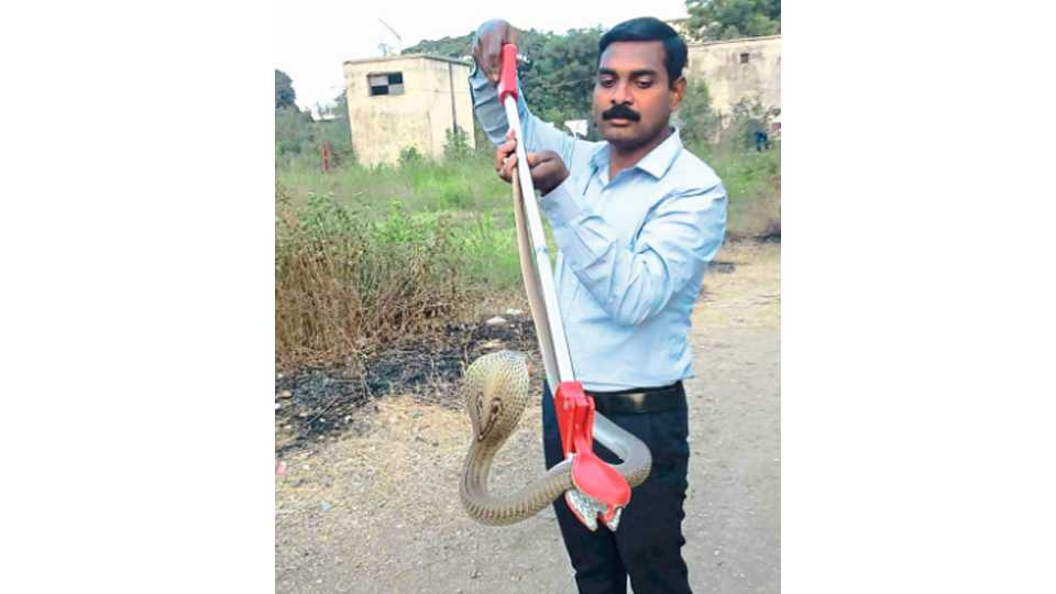 catching a snake made secure clip