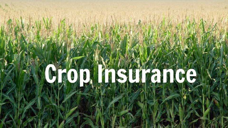 minister take instruction to bank for crop insurance