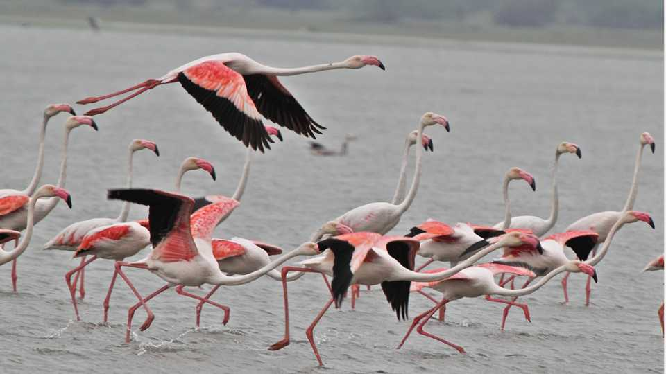 flamingo security