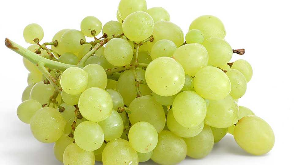 31 lakh discipleship grape farmers
