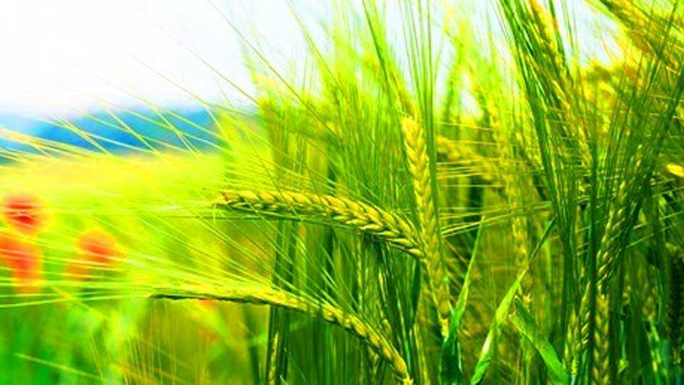 marathi news farmer news new delhi news farmer strike