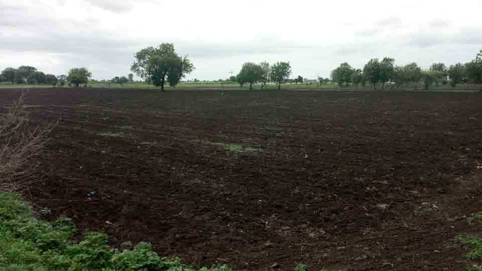 Half of the area in Parbhani district without sowing