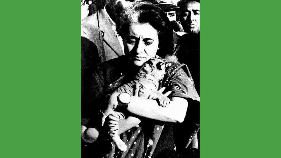 निसर्गस्नेही, पर्यावरणप्रेमी असलेल्या माजी पंतप्रधान इंदिरा गांधी यांनी आपला पन्नासावा वाढदिवस वाघाच्या बछड्यासमवेत साजरा केला होता. (संग्रहित छायाचित्र)