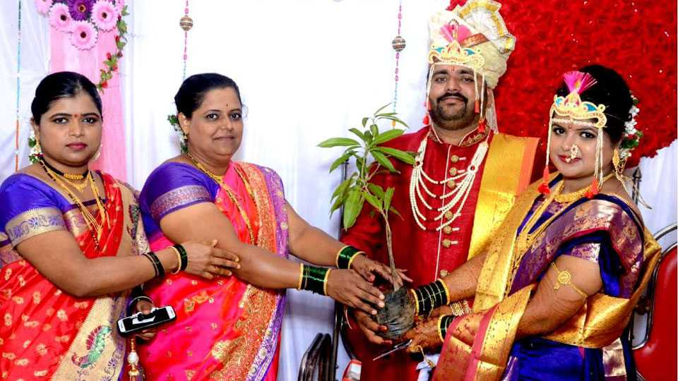 Pune news tree plant distribute in marriage ceremony