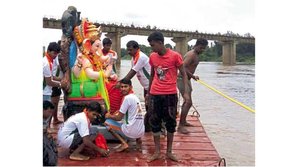 मिरज - कृष्णाघाट (मिरज) कृष्णा नदीत गणपतीचे विसर्जन करताना आरग येथील तरुण मित्र मंडळाचे कार्यकर्ते.