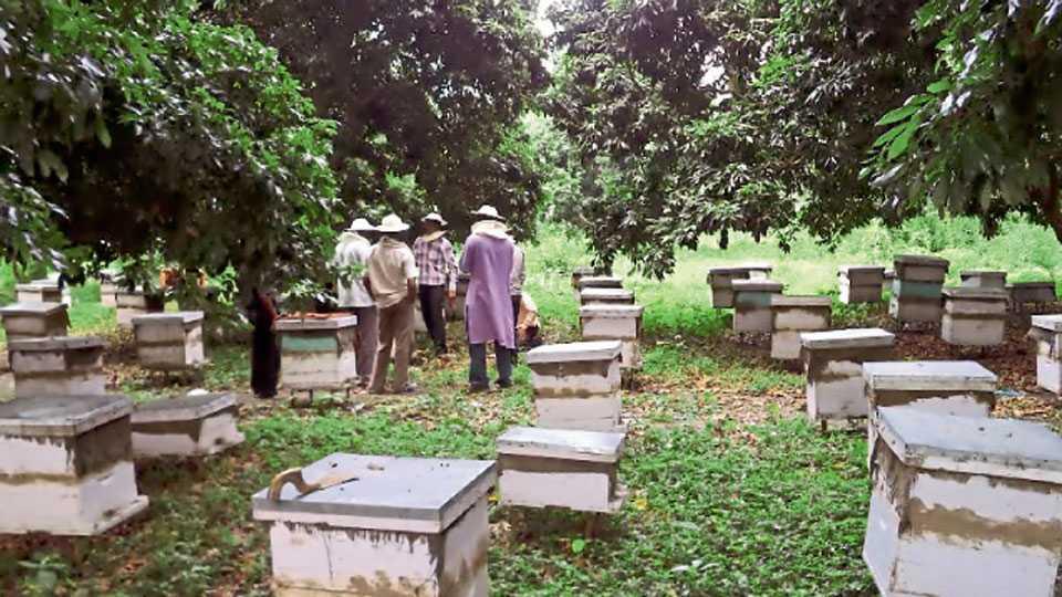 मधमाश्यांच्या वसाहती शेतात अाणण्यापूर्वी योग्य पूर्वतयारी करणे अावश्यक अाहे.
