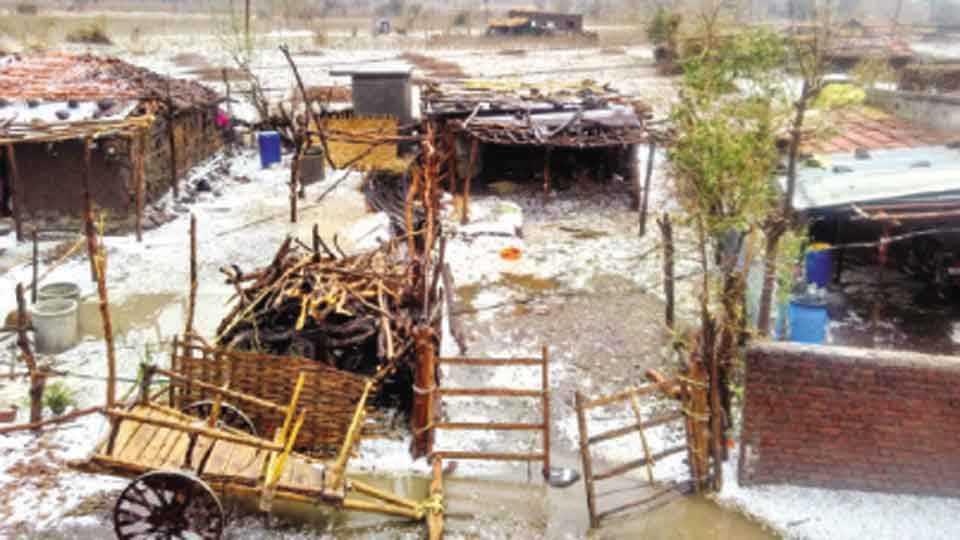 सोनखास - गावात घरांवर व गल्लीत साचलेला गारांचा खच.