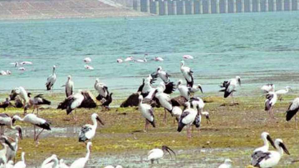 Jayakwadi-Bird-Sanctuary