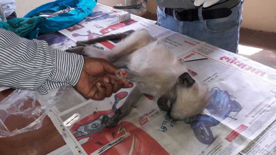 A monkey has lost his hand due to electric shock