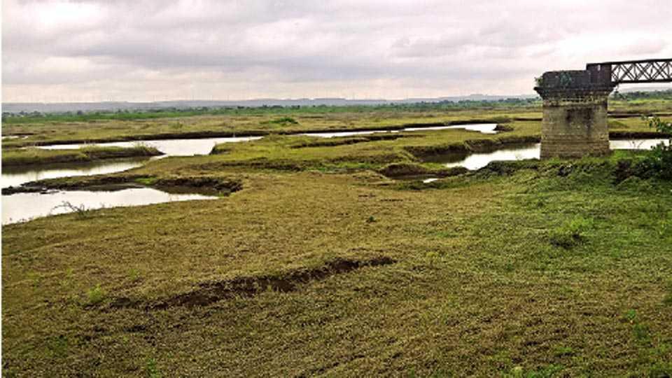 मायणी - ब्रिटिश राजवटीतील तलावात पाण्याअभावी डबकी दिसू लागली आहेत.