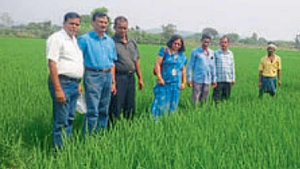 ओडिशा राज्यात संयुक्त प्रकल्पाच्या माध्यमातून गीतांजली भात जातीची लागवड वाढली.