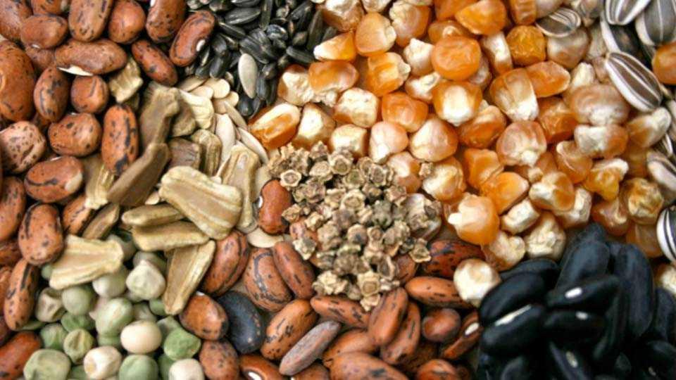 Bogus Seed