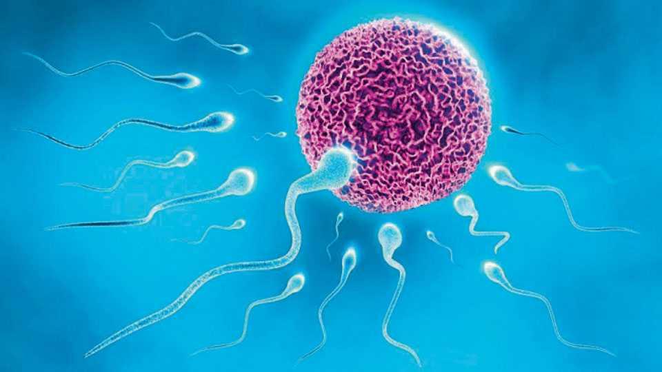 Spermatozoon
