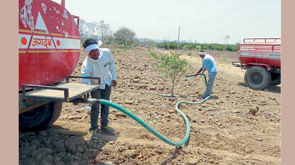 दिग्रस, जि. यवतमाळ - परिसरात सध्या नैसर्गिक स्रोत आटल्याने फळबागा जगविण्याकरिता शेतकऱ्यांवर टॅंकरद्वारे पाणी देण्याची वेळ आली आहे. रामनगर शिवारातील शेतात टॅंकरने पाणी देऊन फळबाग वाचविण्याकरिता चाललेली शेतकऱ्याची धडपड.
