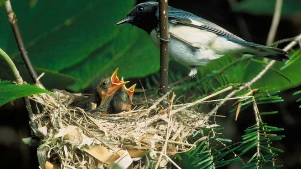 ध्वनीप्रदूषणामुळे पक्ष्यांचे अस्तित्व धोक्यात