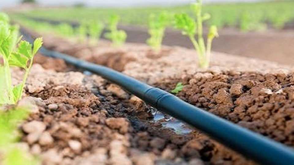 drip-irrigation