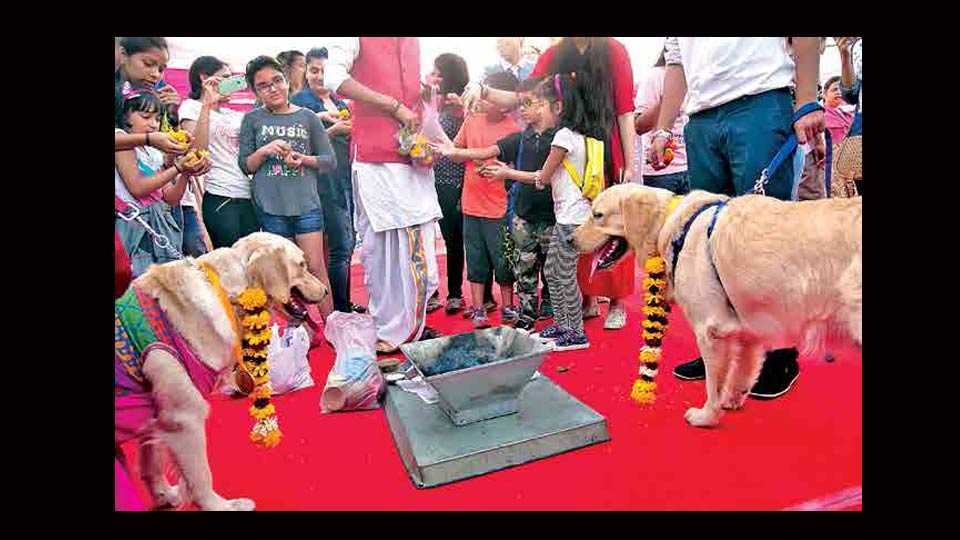 Dogs wedding in andheri