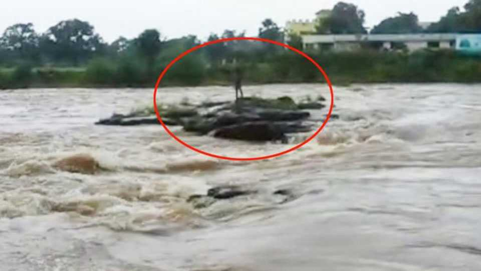young man stuck in the river was released safely in Panvel