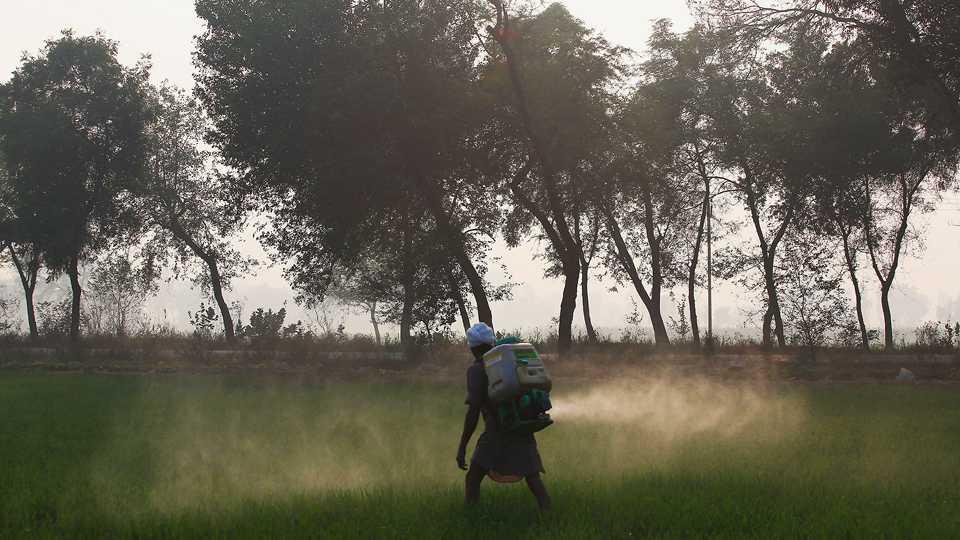 dead cuz of pesticides
