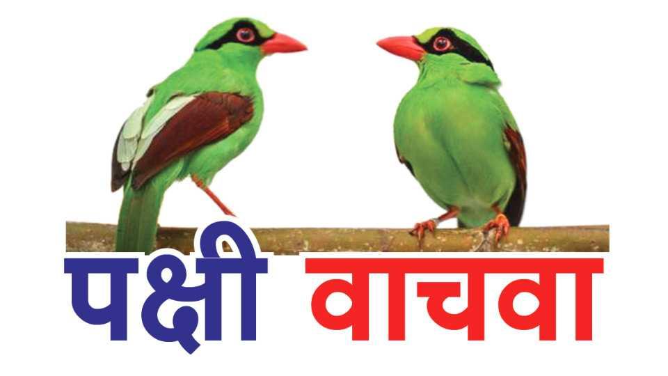 save-bird