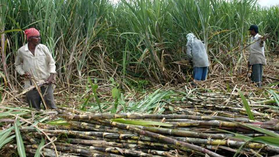 Sugar growers get relief from GST