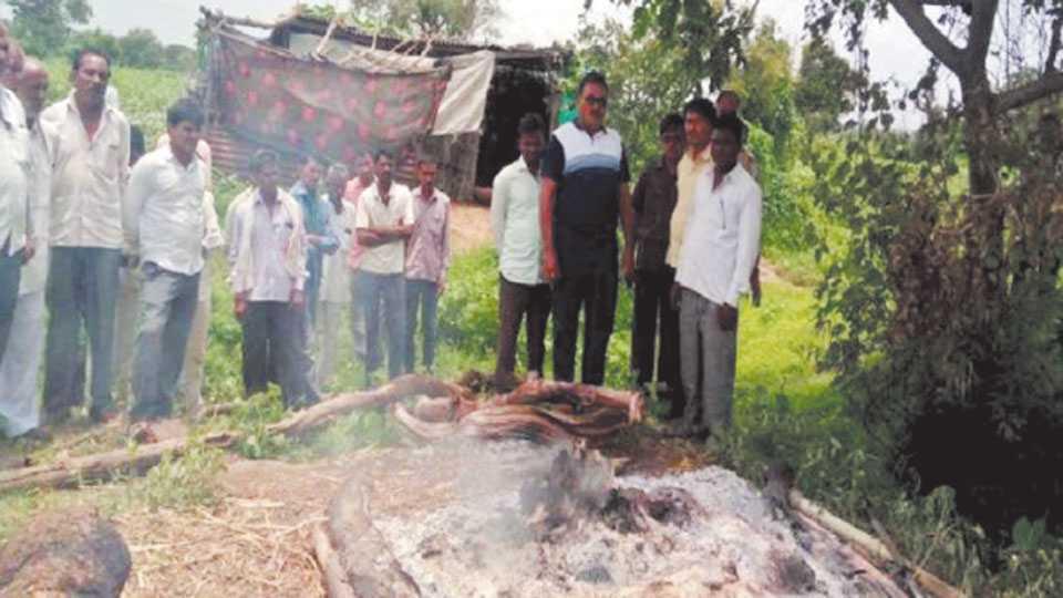 young farmer suicide sindkhedraja