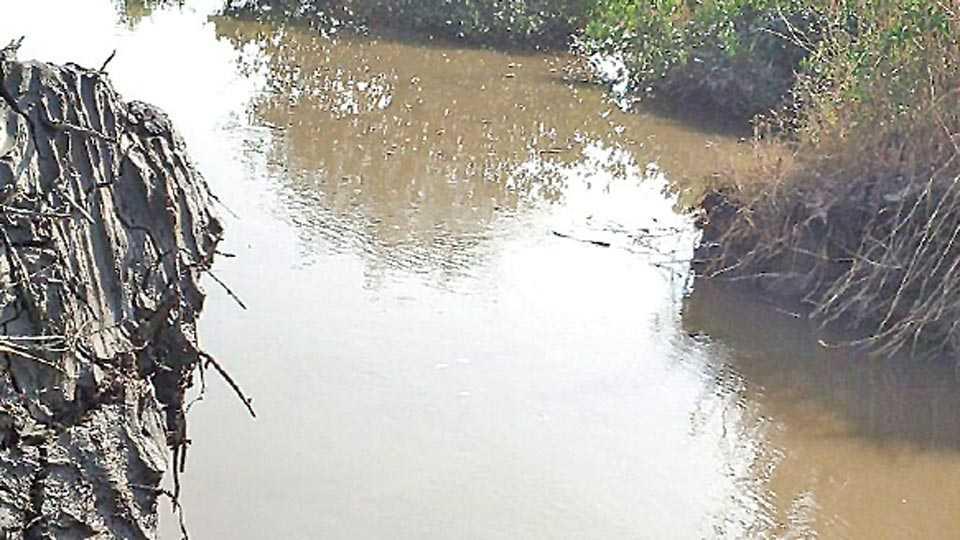 बांध फुटून शेतीत शिरलेले खारे पाणी.