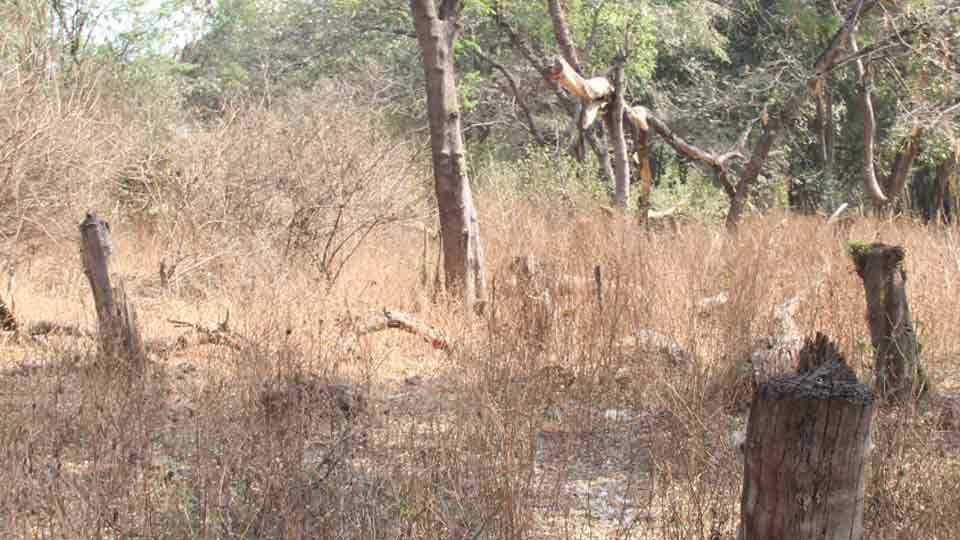 salim ali wildlife sanctuaries