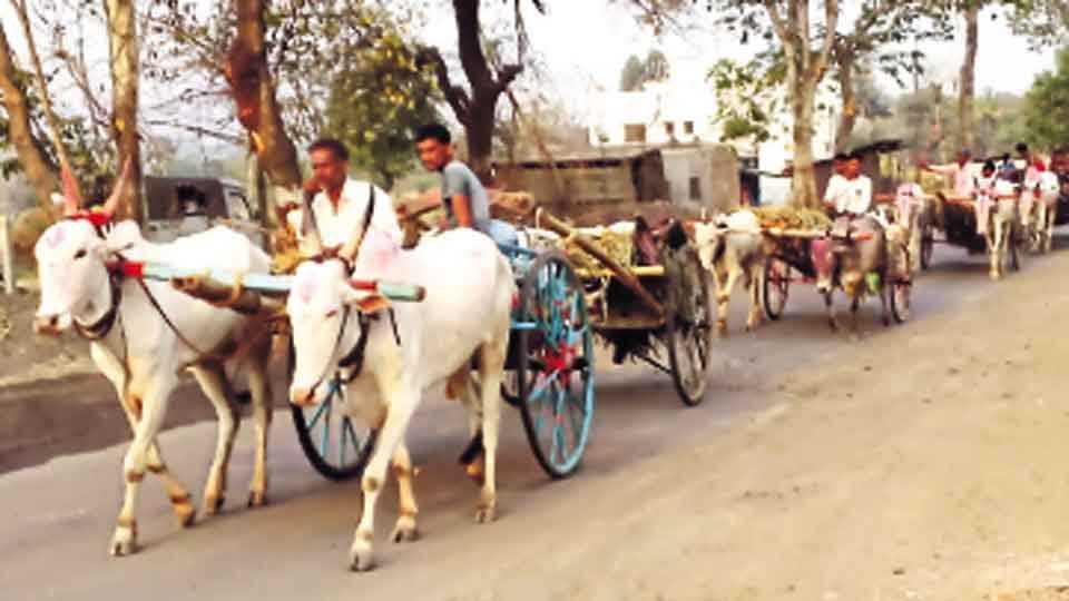 ढेबेवाडी - श्री नाईकबा यात्रेसाठी अनेक भाविक कुटुंबीयांसह बैलगाड्यांतून येत आहेत.