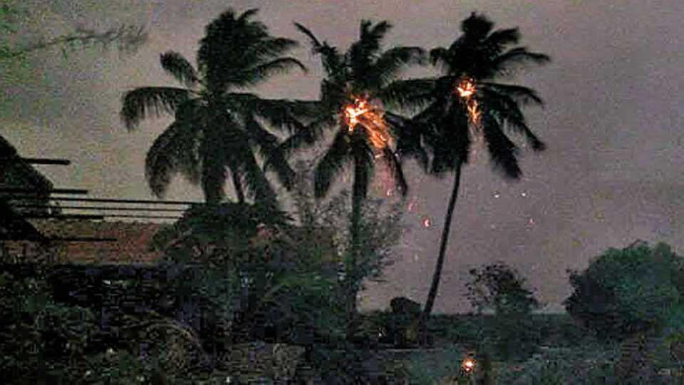 सांगवी (ता. बारामती) - वीज कोसळल्याने पेटलेली नारळाची झाडे.