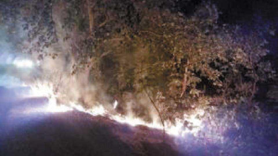 आमगाव - आगीत धगधगत असलेले जंगल.