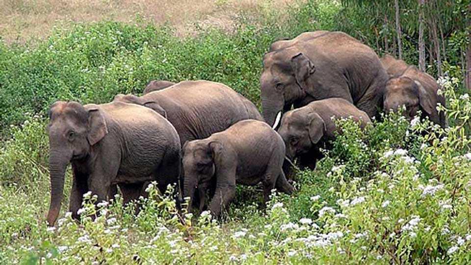 An immediate catch to elephants