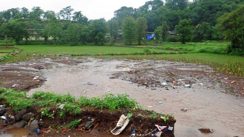 rice farm loss due to flood