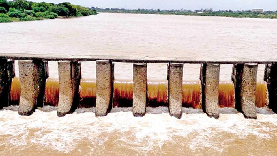 मालेगाव - पुनद धरण क्षेत्रात झालेल्या पावसामुळे गिरणा नदीला आलेले पाणी.