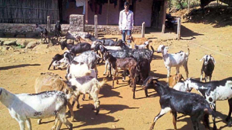 मावळ  - जानकीदेवी बजाज ग्राम विकास संस्थेच्या शेळीपालन प्रकल्पाचे लाभार्थी.