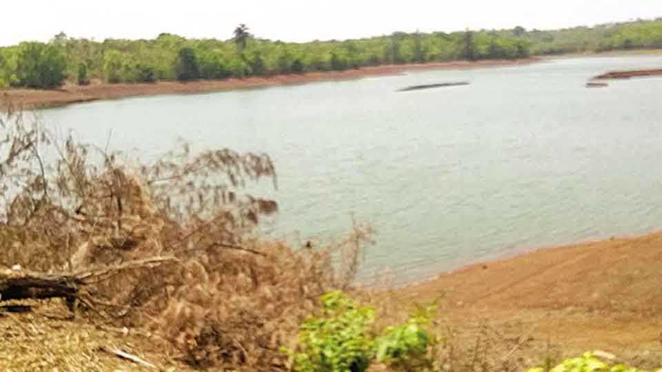 कणकवली - ओझरम तलावातील पाणीपातळी कमालीची खालावली आहे.
