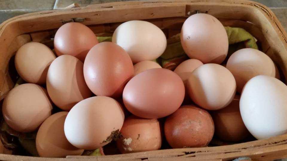 Mumbai News Marathi News Eggs prices higher in Mumbai