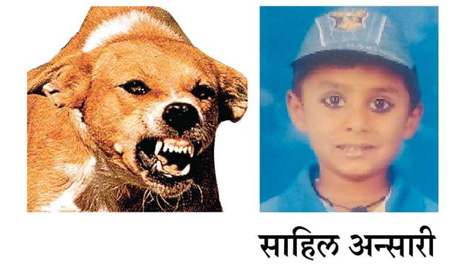 Sahil-Ansari