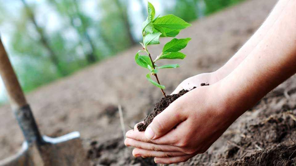 nagar news tree plantation marathi news sakal news