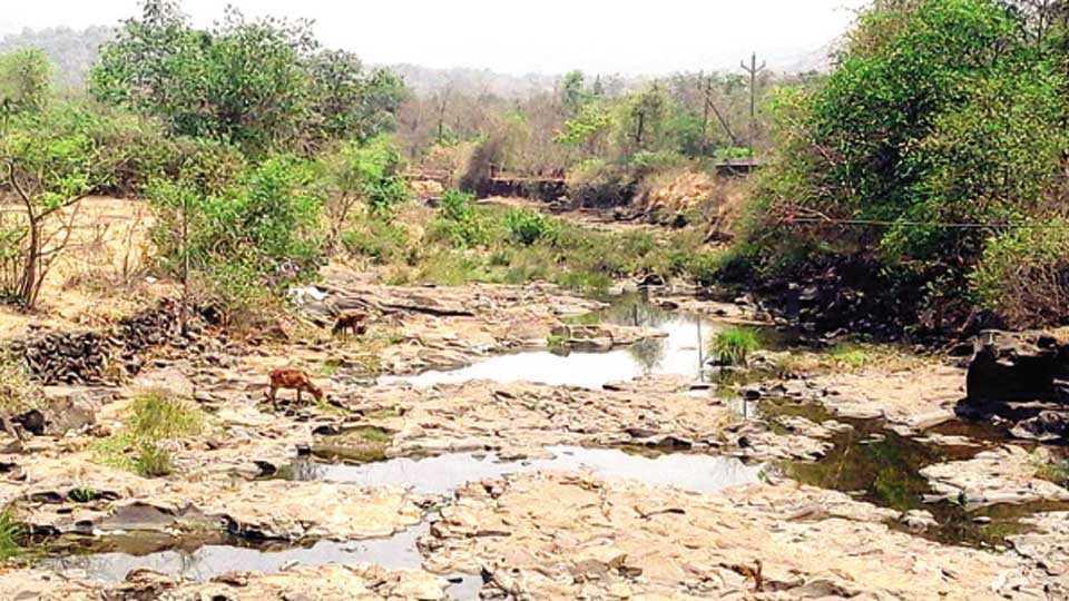खेड - ग्रामीण भागात नदीपात्रात खडखडाट, जनावरेही पाण्याच्या शोधात भटकत आहेत.